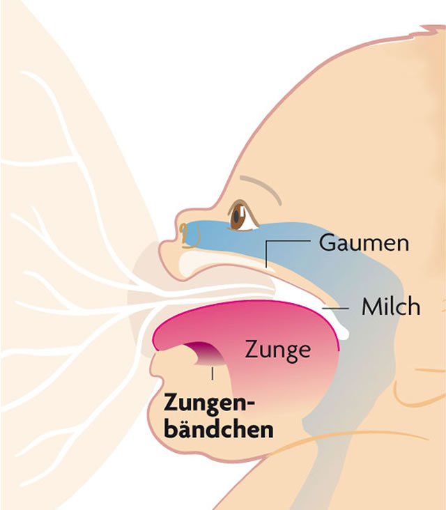 Zungenband